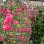 September_garden_2007_005