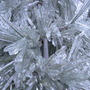 white pine in ice