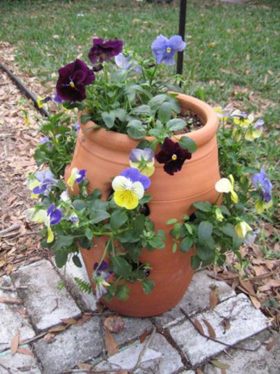 Strawberry Pot Pansies (Viola)