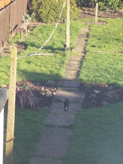 Left View Of My Garden Feb 08