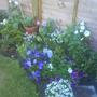 Garden_july_08_03