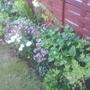 Garden_july_08_04