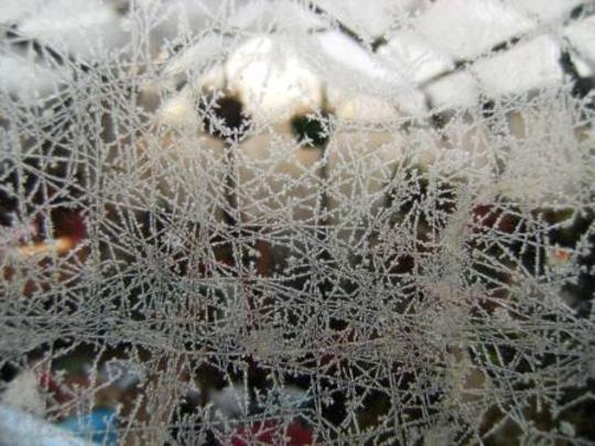 Frost on greenhouse door