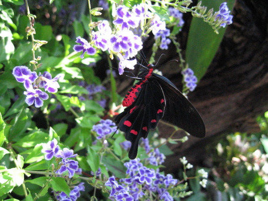 Black and Red Butterfly on Sky Flower