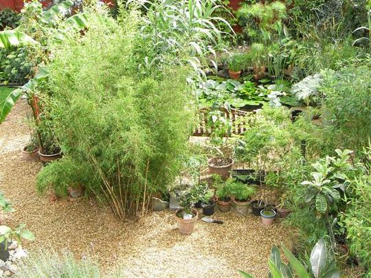 bamboo near pond
