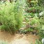 Bamboo_pond
