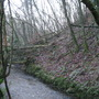 More fallen trees~Ilston Combe near Parkmill Gower