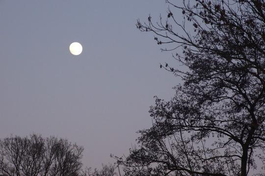 Mooning!