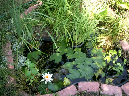 Small pond in Summer