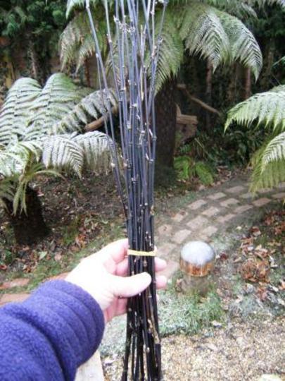 black bamboo supports (Phyllostachys nigra (Black bamboo))