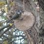 Squirrelblog_003