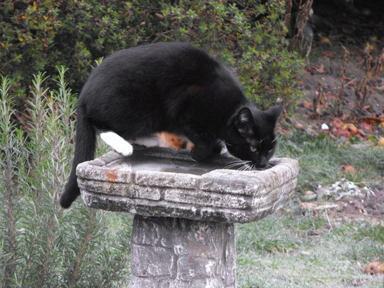 Febe Having a Lick Of The Bird Bath Lolly lol