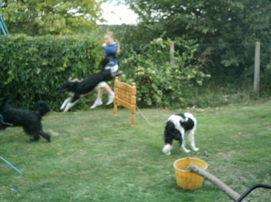 Garden or agility course?