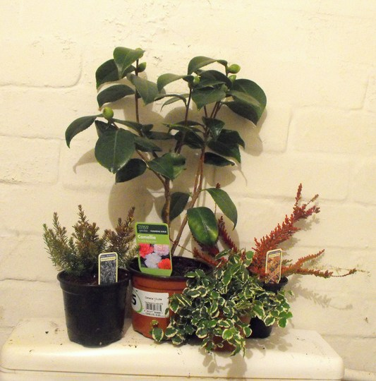 My New Plants :)