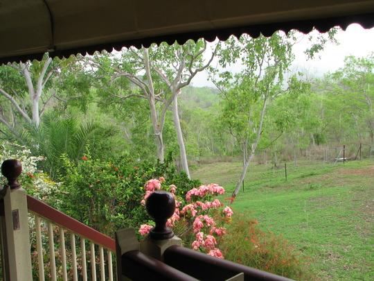 View over front garden bed across to the surrounding Australian bush.