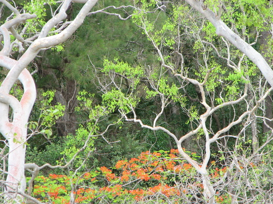Looking out over the gums - before the rainy season comes.