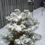Winter_beauty_2005_02_22_003