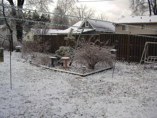 The back garden in January