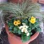 Lower_chimney_replanted