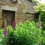 Bide A Wee Cottage gardenoutbuilding with foxgloves