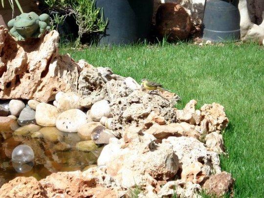part of my garden 5/my pond
