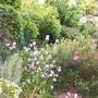 My very small, low maintenance garden
