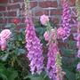 Garden_098
