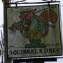 Squirrel_s_drey