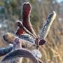 frosty_leaves_zoom.jpg