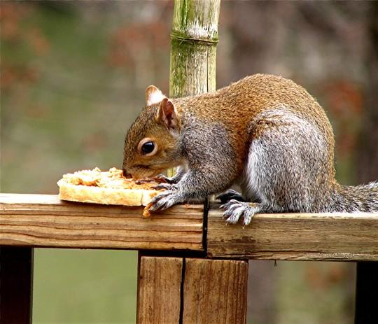 Yummy...., Chunky peanutbutter...My favorite !