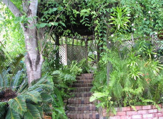 Cycad in the courtyard garden