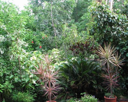 Still more of the courtyard garden