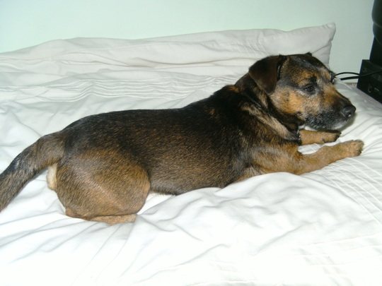 Is Paddy allowed up here on the bed?