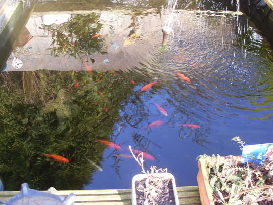 Fish enjoying the sunshine today