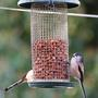 Long_tailed_tits