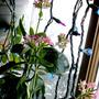Kalanchoe_Flowers_4-1.jpg (kalanchoe)