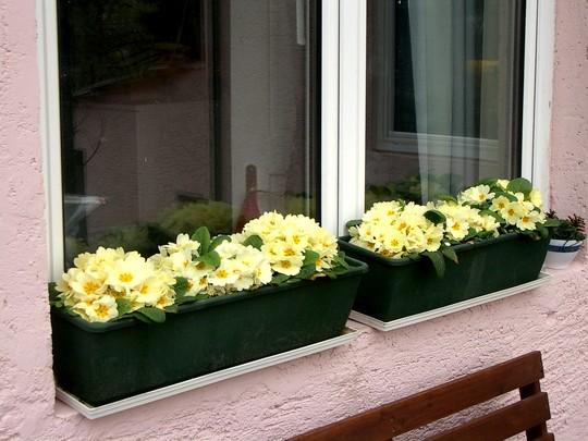 Window box on terrace March 2007