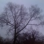 The Splendour of Trees