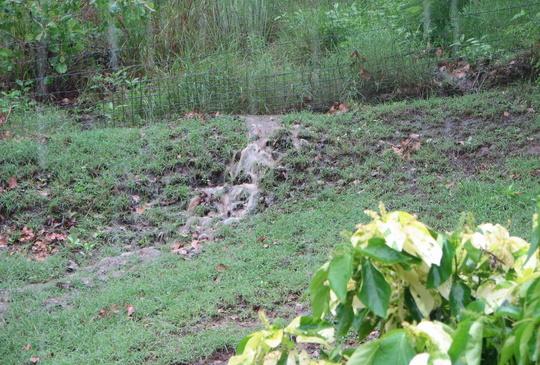 We're getting waterfalls in the yard!