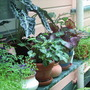 Greenhouse pot plants are loving the rain though!