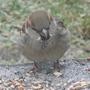 Birdwatchw.e25.01.09_005_1