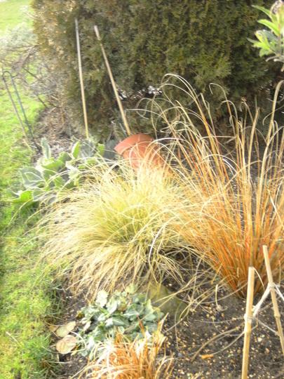 Winter sun on the grasses