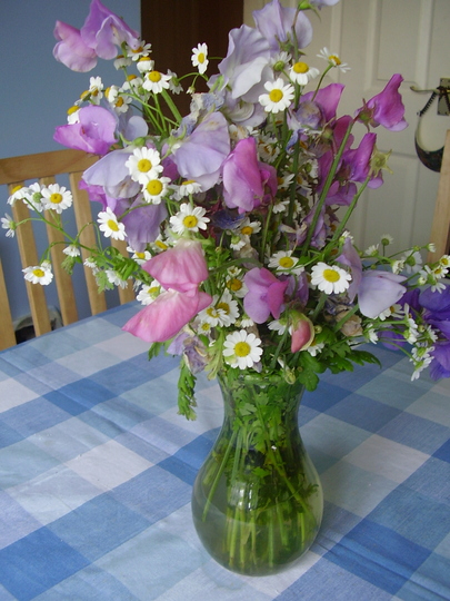 Sweetpeas and Feverfew