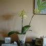 my birthday orchid