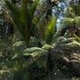 nz greenery