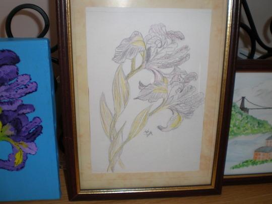 pencil drawing of iris by Jules Wall 2007