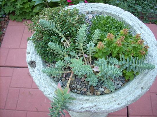 Little portable garden