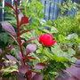 Garden_o7_005