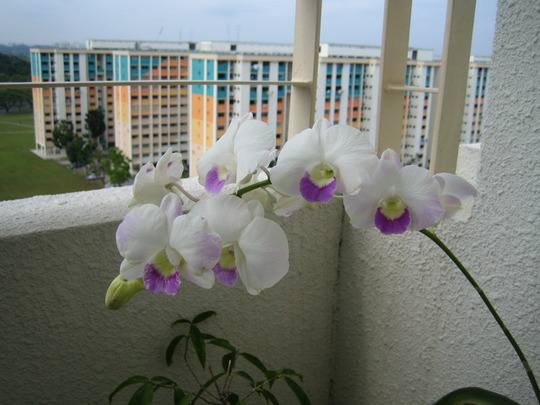 white purple orchid in the day