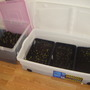 my_seedlings_010.jpg